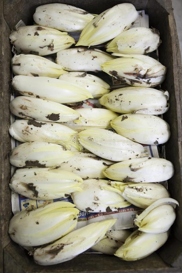 Download Endives Ready To Be Cleaned Stock Photo - Image: 37114338