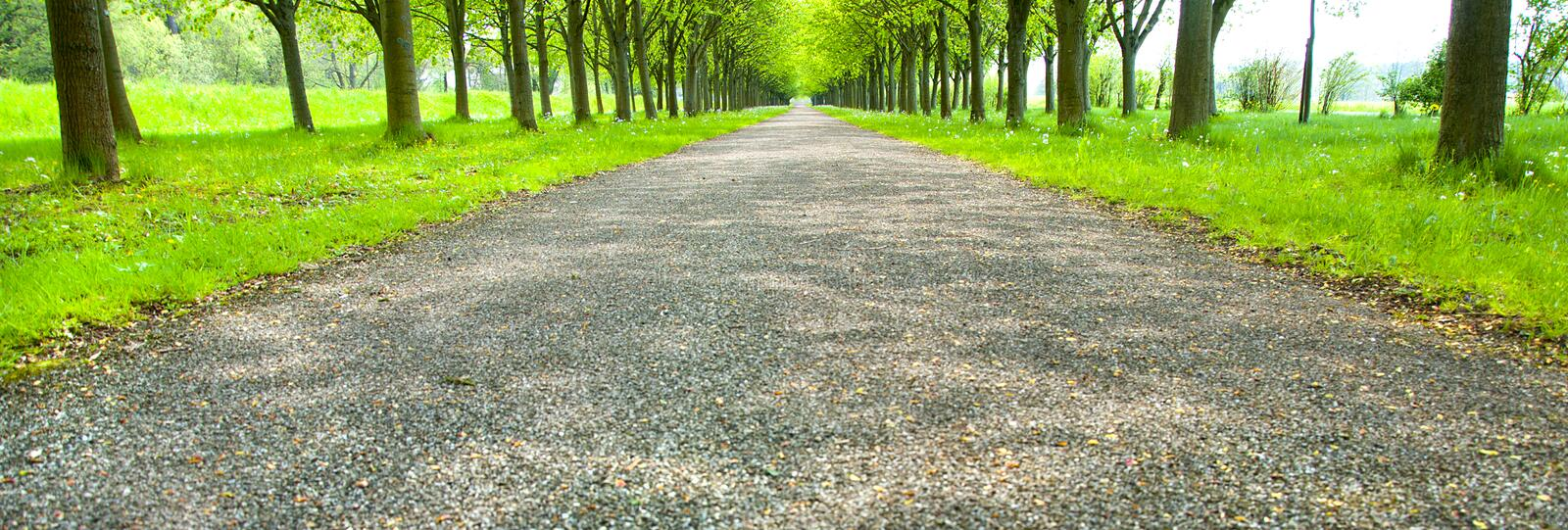 Endless Canopy Road Stock Image