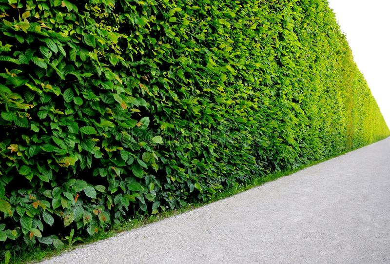 Endless hedge royalty free stock photos