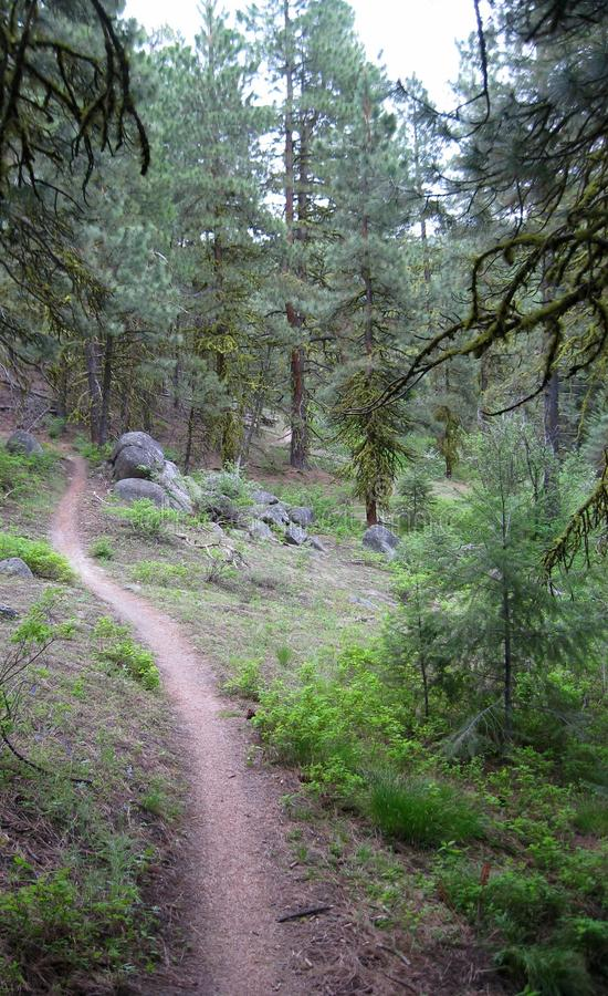 Endless mountain trail bordered by trees royalty free stock photography