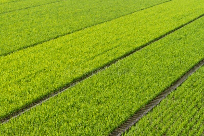 Endless Rice Fields stock photo