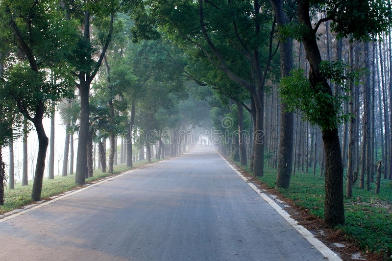 Endless road. A endless road across woods royalty free stock photos