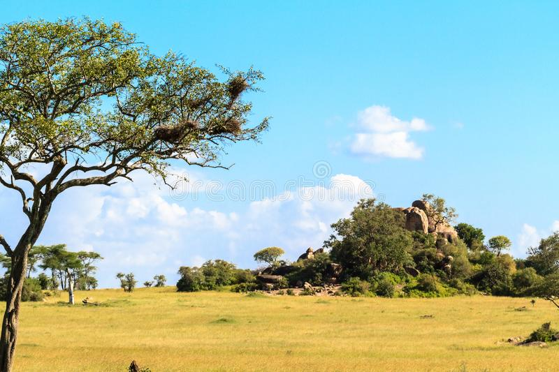 Endless savanna of Serengeti. Hill and trees and blue sky. Tanzania, Africa royalty free stock image