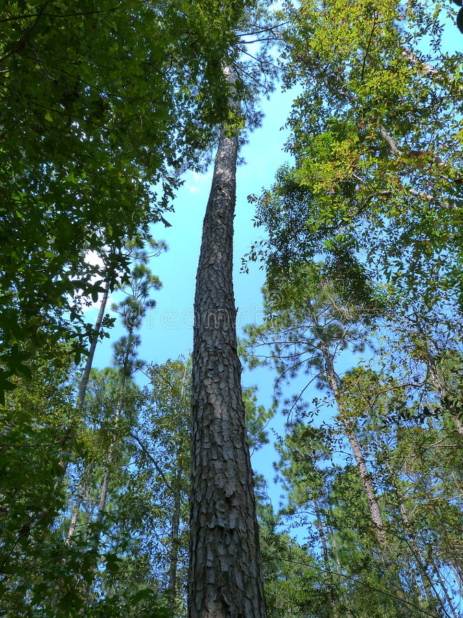 Endloser Baum lizenzfreie stockfotografie