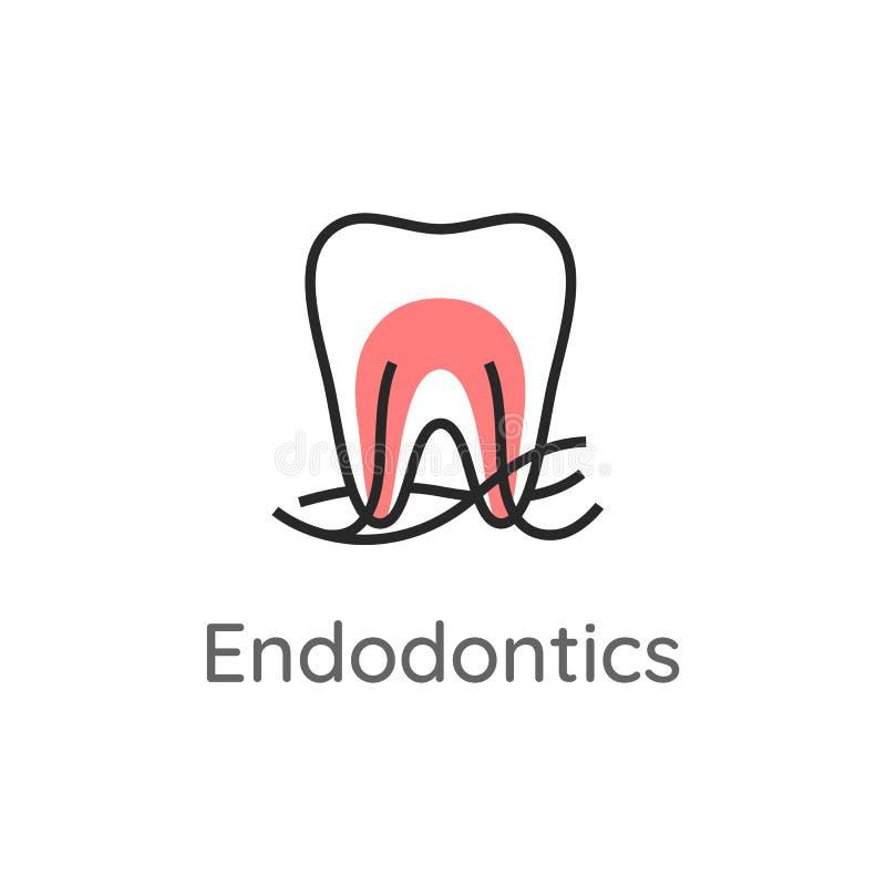 Endodontics Tanden med rotar kanaler och nerver tand- symbol Stomatologylogo eller illustration linje stil vektor illustrationer