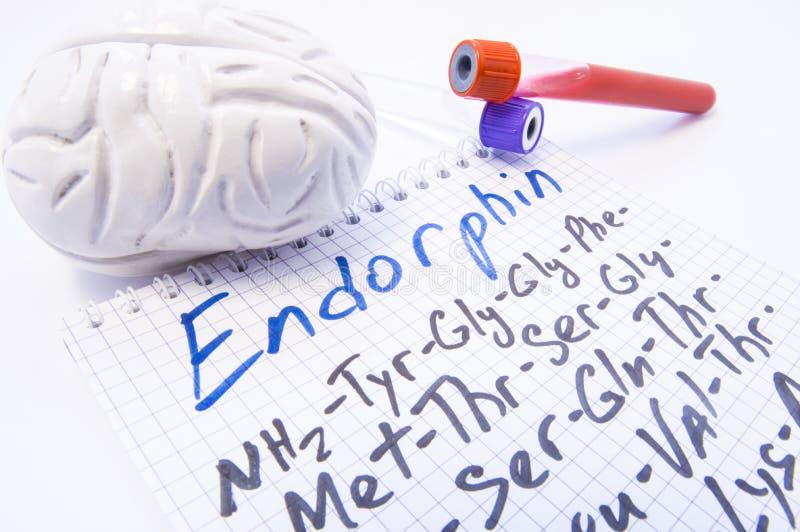 Endorphine opioidneuropeptides Två laboratoriumprovrör med blod och modellen av hjärnan är nära titelEndorphin och dess kemikalie royaltyfria foton