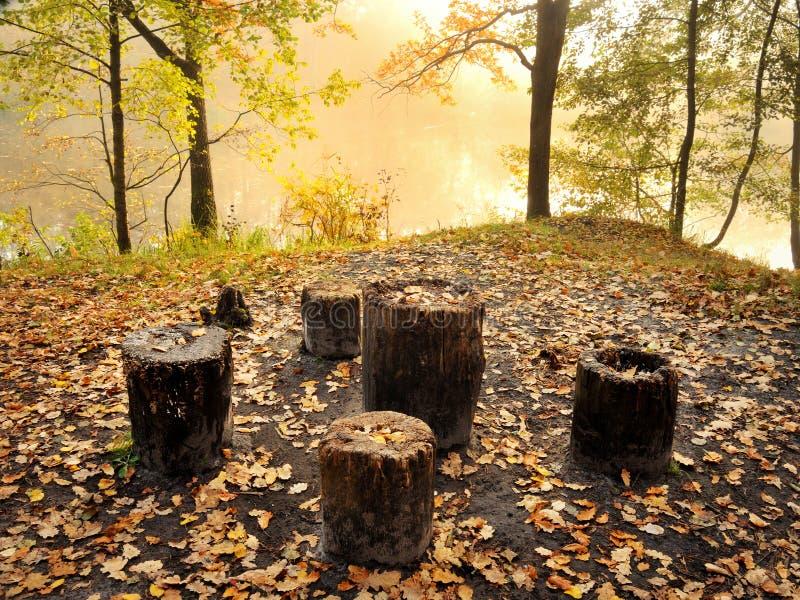 Endroit de repos dans la forêt photographie stock