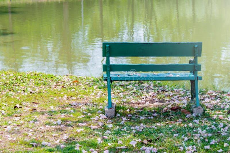 Endroit vert de banc en m?tal sur le champ vert de pr? d'herbe de pelouse entour? avec la chute rose s?che de fleur des arbres en images stock
