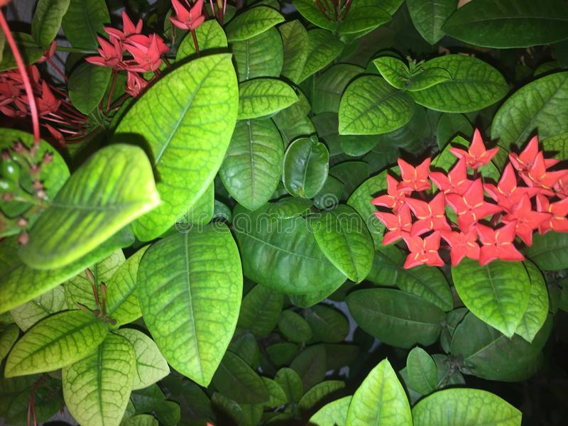 Endroits verts et rouges images stock