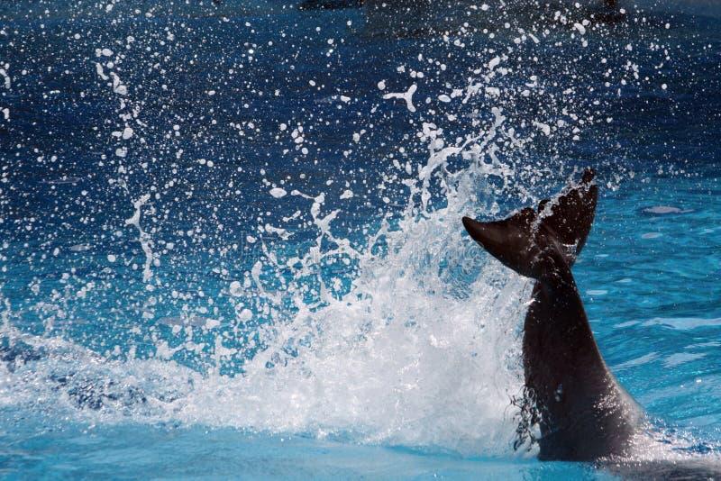 Endstück des Delphins Spritzen machend stockfotos
