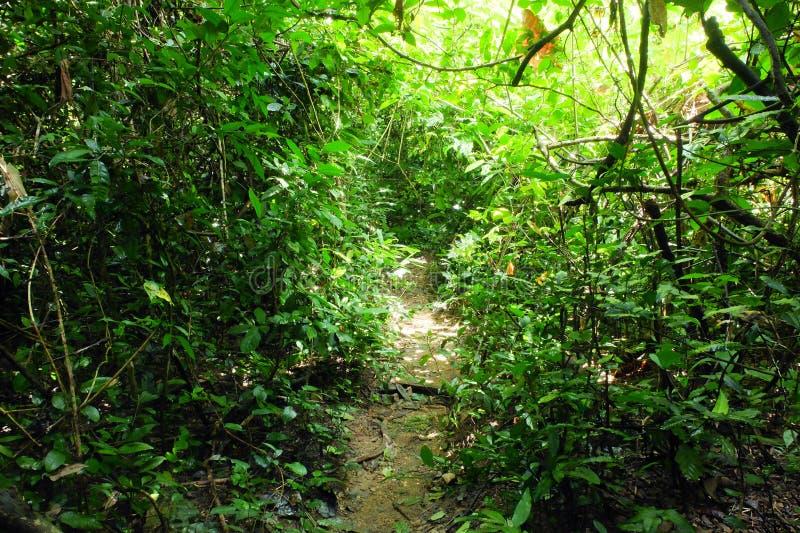 Endstück im Wald bei Thailand stockbild