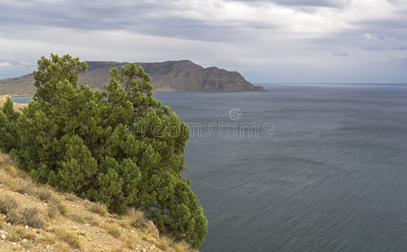 Enebro encima de una montaña sobre el mar fotos de archivo