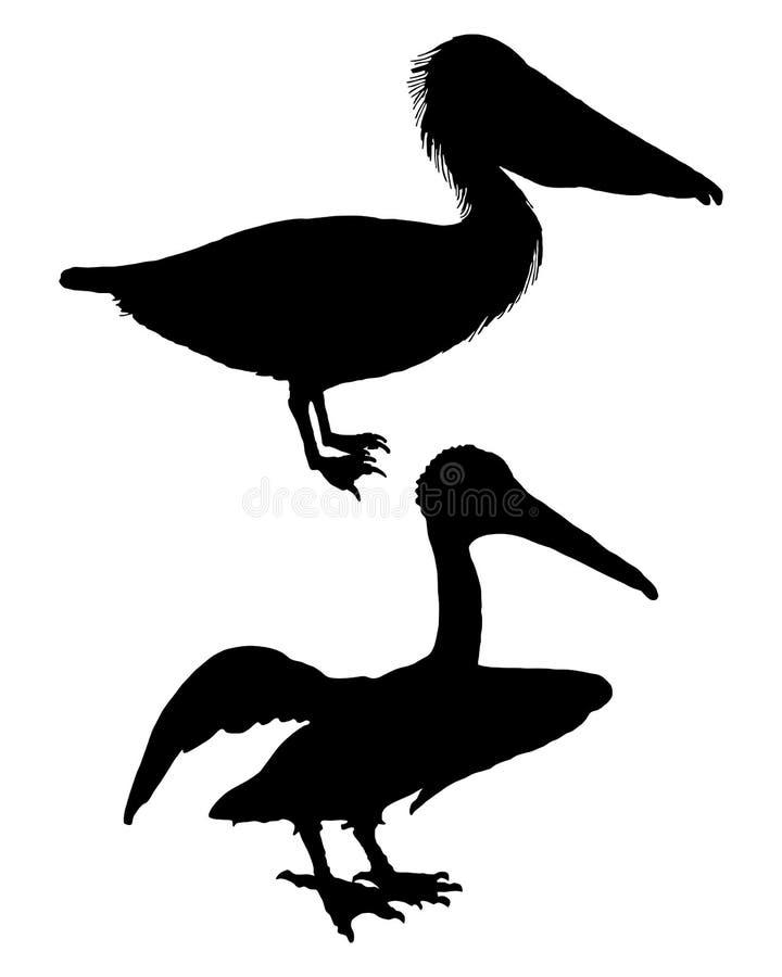 Enegreça pelicanos ilustração royalty free