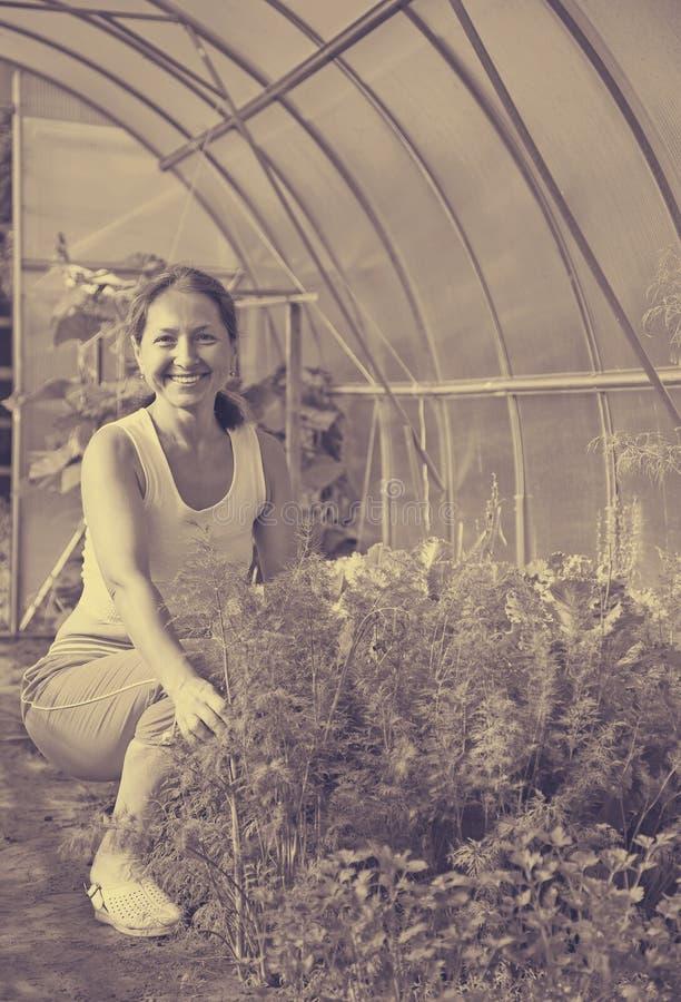 Eneldo de la cosecha de la mujer fotografía de archivo libre de regalías