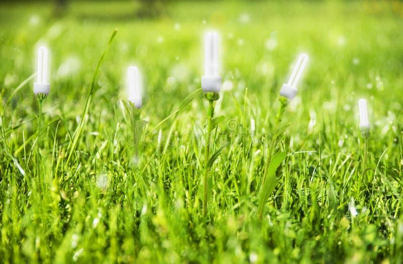 Energía de Renevable, concepto de la bombilla en prado foto de archivo