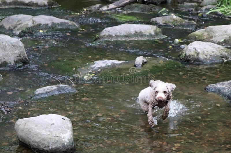 A dog playing in water on a summer day royalty free stock photos