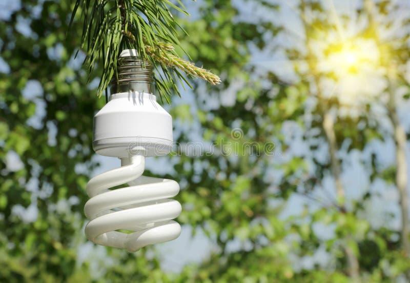 Energi - sörjer den ljusa kulan för sparandet på en filial av royaltyfria bilder