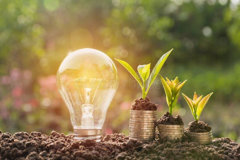 Energi - sparande ljus kula och träd som växer på buntar av mynt arkivfoton
