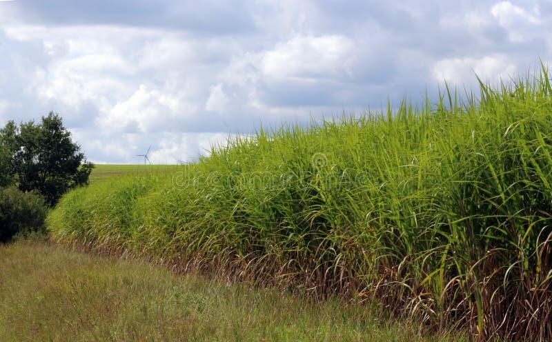 Energia odnawialna, pole z japońską srebną trawą, silnik wiatrowy w bac zdjęcia stock