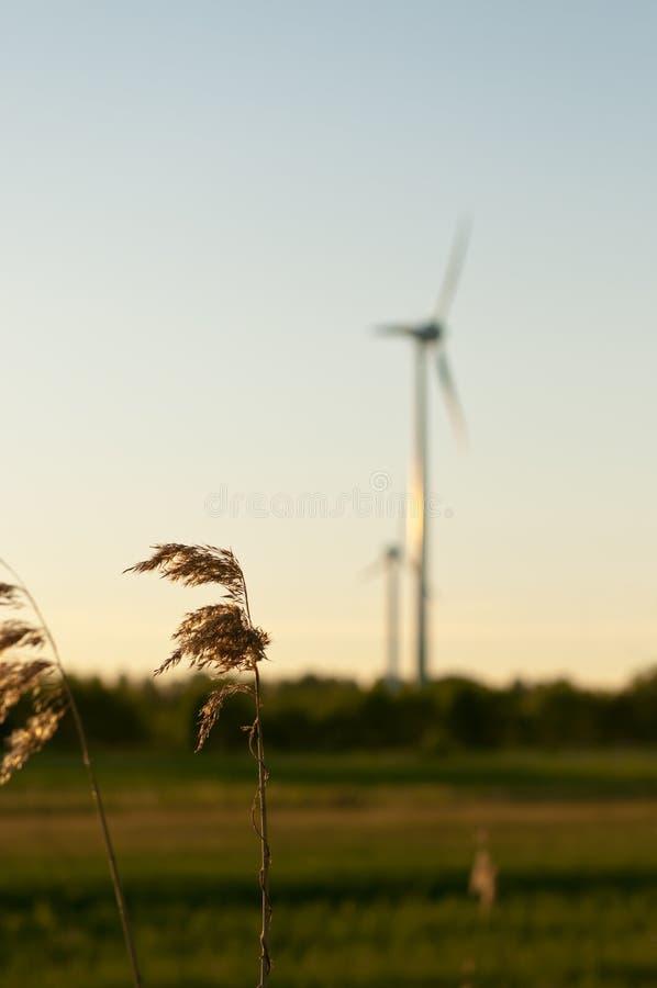 energia podmuchowy wiatr fotografia royalty free