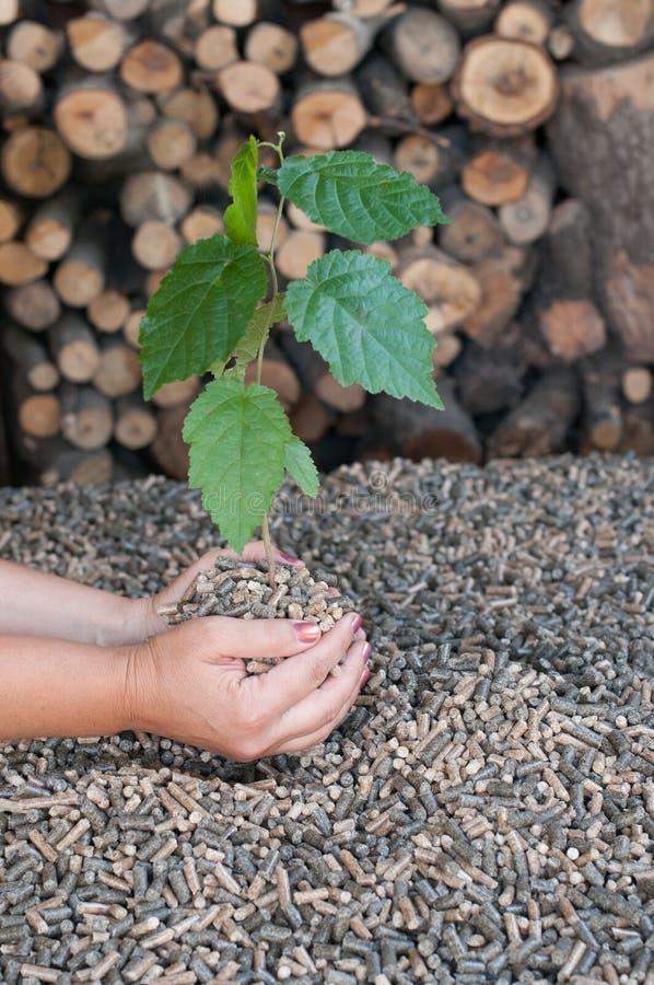 Energia rinnovabile, biomassa di legno in palline fotografia stock libera da diritti