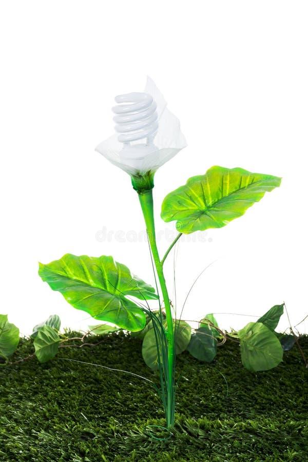 Energieconcept, installatie van de aarde de vriendschappelijke gloeilamp, op wit royalty-vrije stock afbeelding