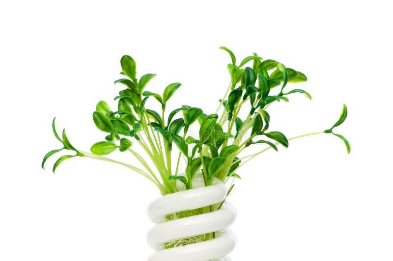 Energiesparende Lampe mit grünem Sämling stockbilder