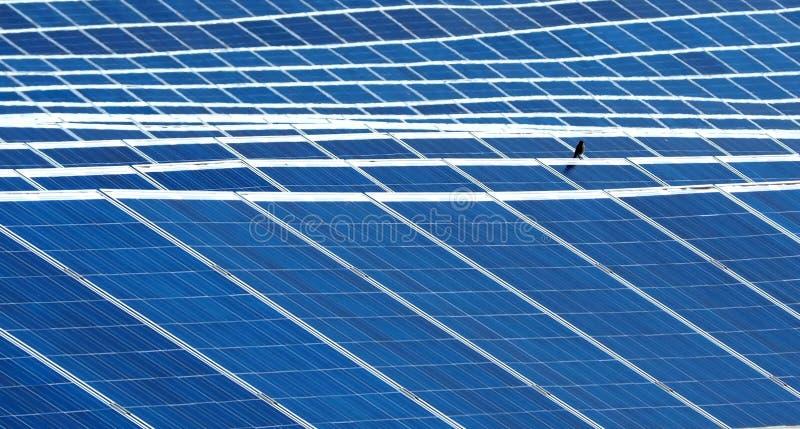 Energii słonecznej roślina z mały ptasi odpoczywać na jeden panel krawędzi obrazy royalty free