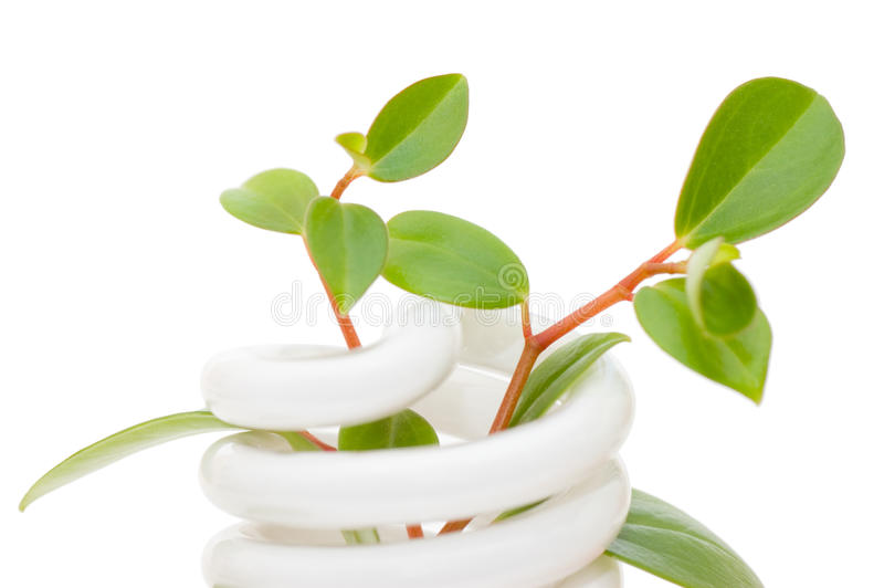 energii zielona lampowa oszczędzania rozsada obraz stock