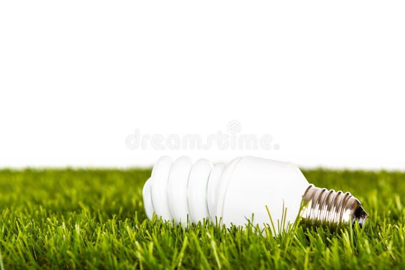 Energooszczędna lampa w zielonej trawie Tam jest tylko jeden fotografia royalty free