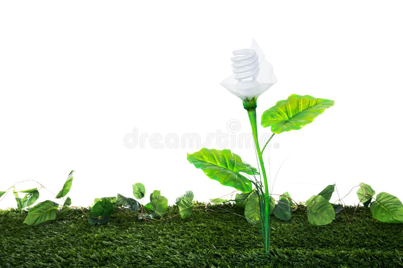 Energy concept, earth friendly light bulb plant, on white. Ecological concept, earth friendly light bulb plant isolated on white royalty free stock images