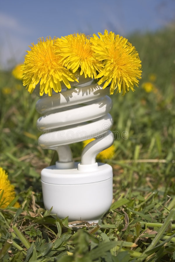 Energy saving bulb with dandelions stock photo