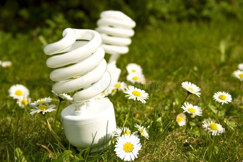 Energy saving bulbs on daisy field royalty free stock images