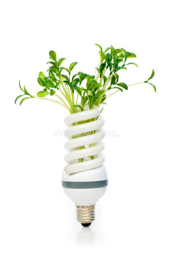 Download Energy Saving Lamp With Green Seedling Stock Image - Image: 12169843