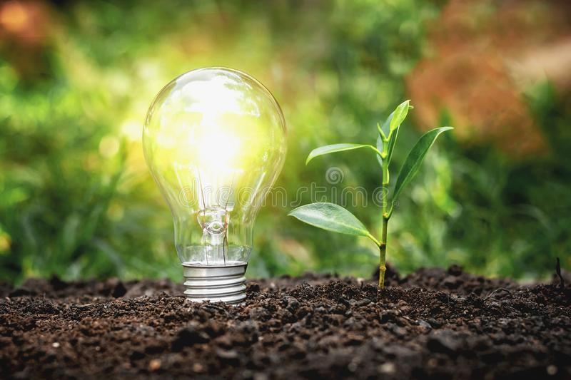 Energy saving lamps and planting trees on the soil ground Electric energy saving concept. Light, sustainability, innovation, idea, nature, ecology, sustainable stock photography