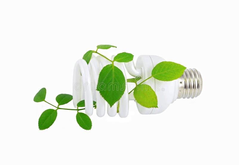Energy saving light bulb and plant royalty free stock photography