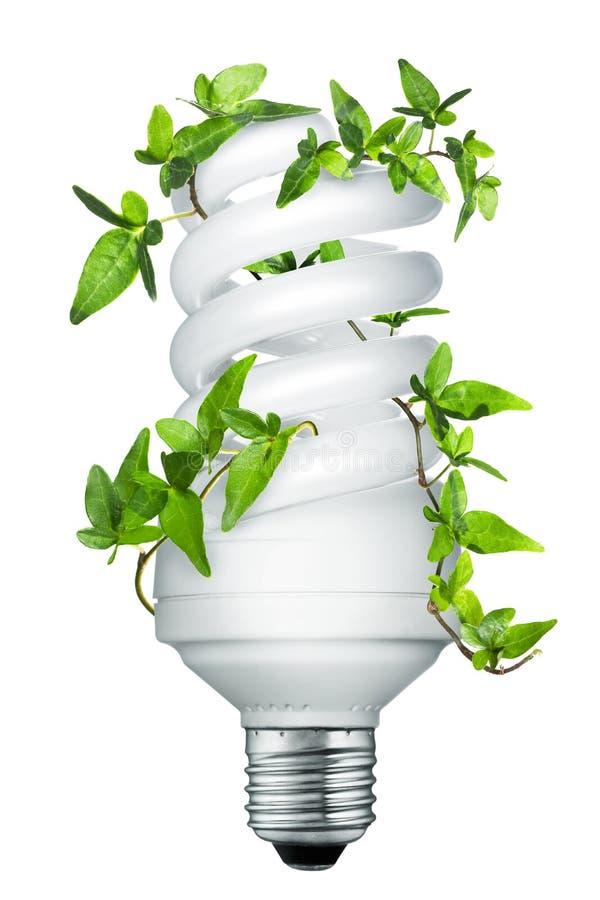 Energy saving lightbulb (light bulb) royalty free stock photos