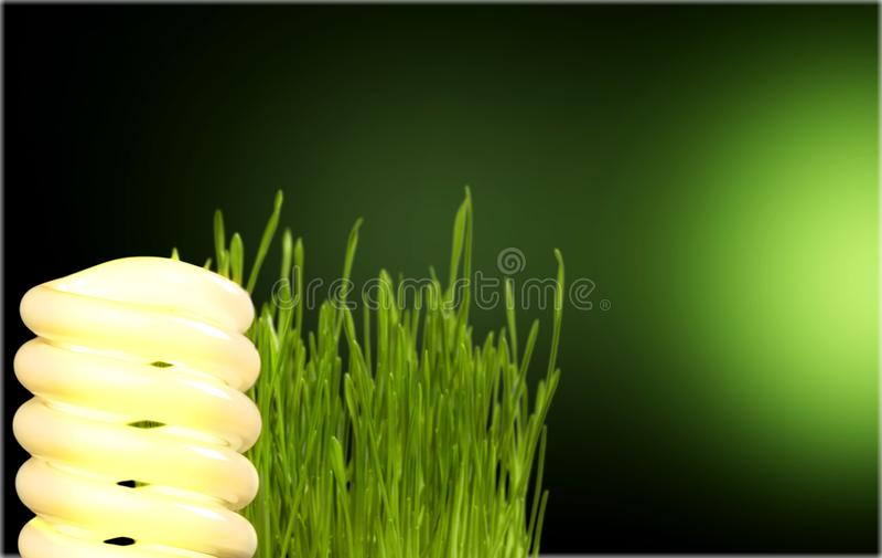 Energy Savings. Light Bulb Efficiency Electricity Lighting Equipment Compact Fluorescent Lightbulb Green stock image