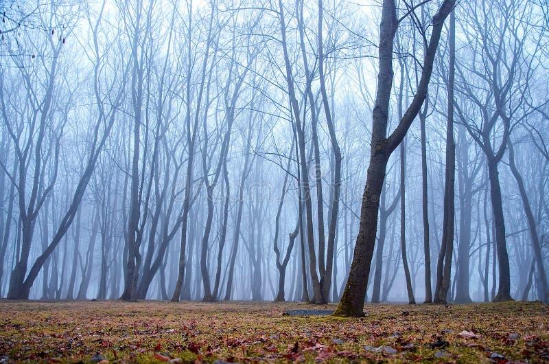Enevoado na floresta fotografia de stock royalty free