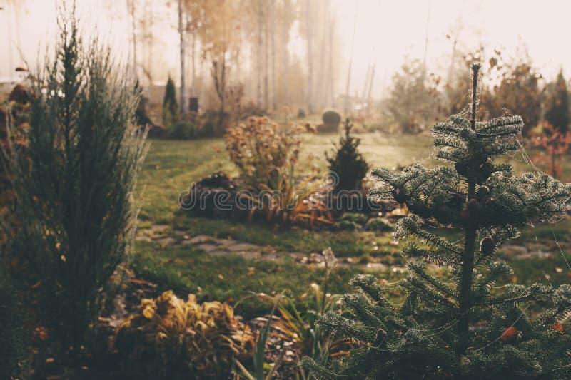 Enevoe no amanhecer no outono atrasado ou no wintergarden imagem de stock royalty free