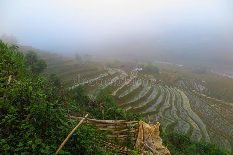 Enevoe sobre um ricefield em Sapa, Vietname imagem de stock