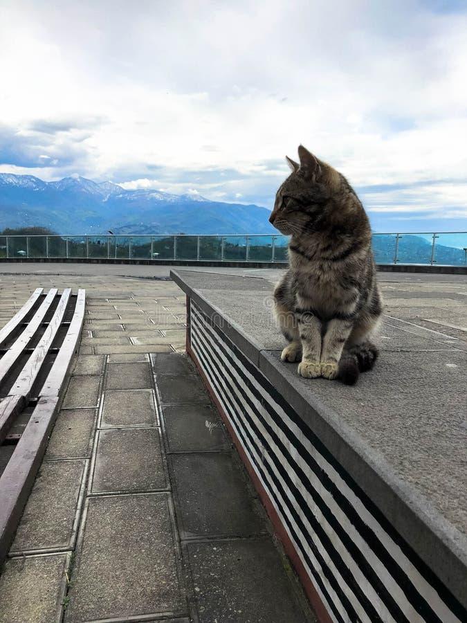 Enfärgad liten katt sitter på en sockel mot bakgrunden av en ljus blå genomdränkt himmel och berg arkivfoton
