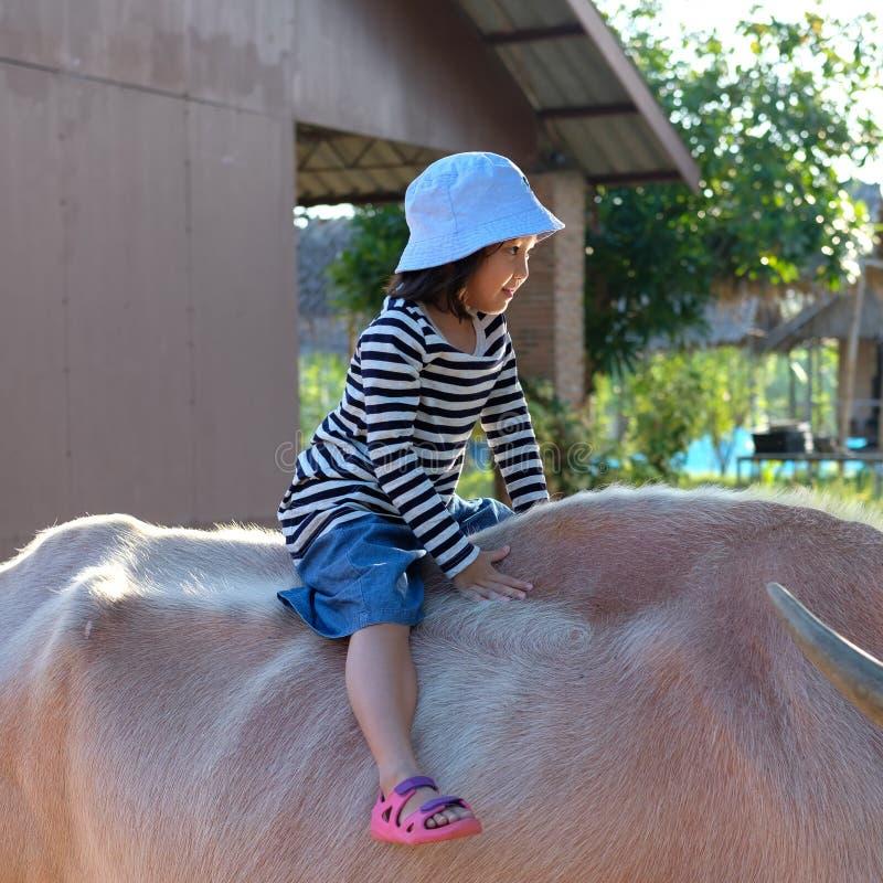 Enfant asiatique souriant, enfant touriste chevauchant le buffle blanc dans la ferme Activités familiales photographie stock