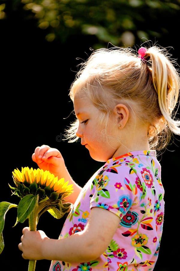 Enfant avec des tournesols dans le jardin en été image libre de droits