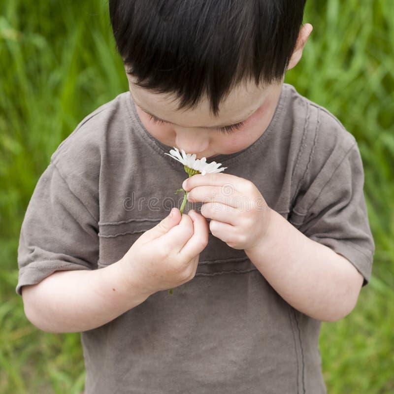 Enfant avec la marguerite photo stock