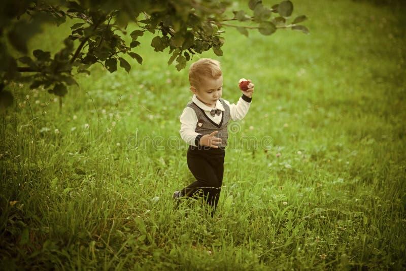 Enfant avec le fruit de pomme dans le jardin, santé images libres de droits