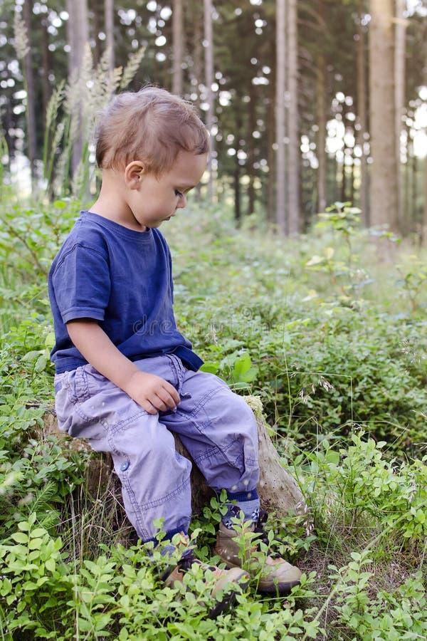 Enfant dans la forêt de myrtille photographie stock