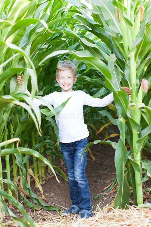 Enfant dans le labyrinthe de maïs photo libre de droits