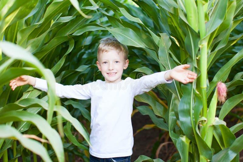 Enfant dans le labyrinthe de maïs photographie stock libre de droits