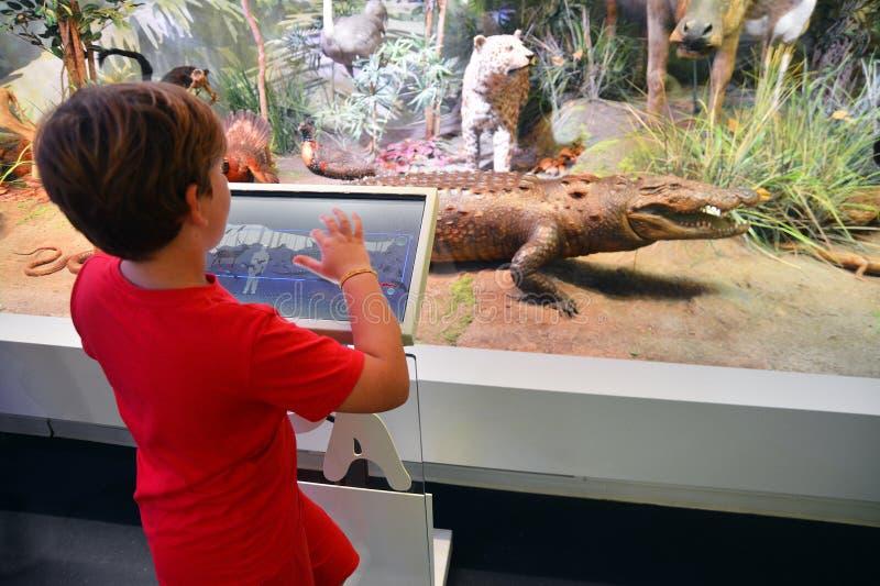 Enfant dans le musée images stock